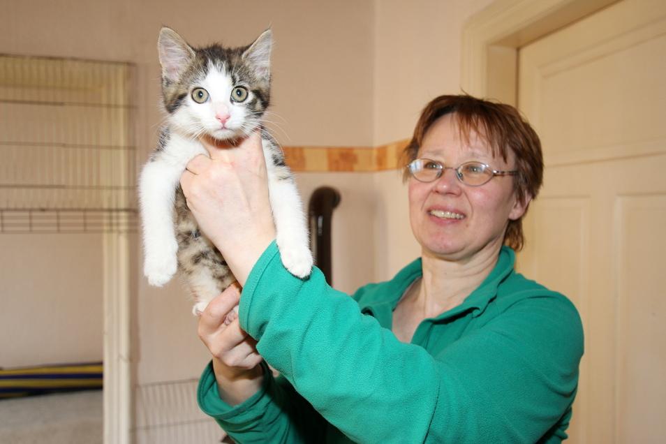 """Katze """"Mini"""" wird derzeit von Michaela Filla von der Roßweiner Katzeninitiative aufgepäppelt. Sie entwickelt sich prächtig, allerdings machen der kleinen Mieze Ohrmilben zu schaffen. Deswegen ist sie in tierärztlicher Behandlung."""