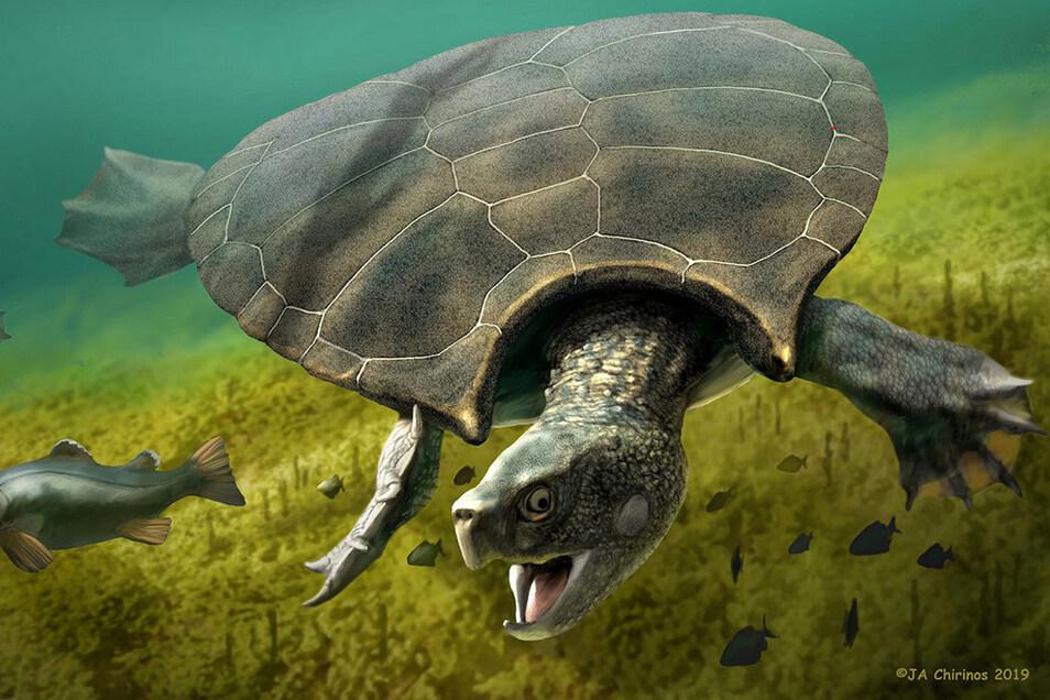 Ein Männchen der Riesenschildkröte jagd im Süßwasser einen Fisch. Überreste eines Stupendemys geographicus wurden in 8 Millionen Jahre alten Ablagerungen in Venezuela von Wissenschaftlern aus der Schweiz gefunden.