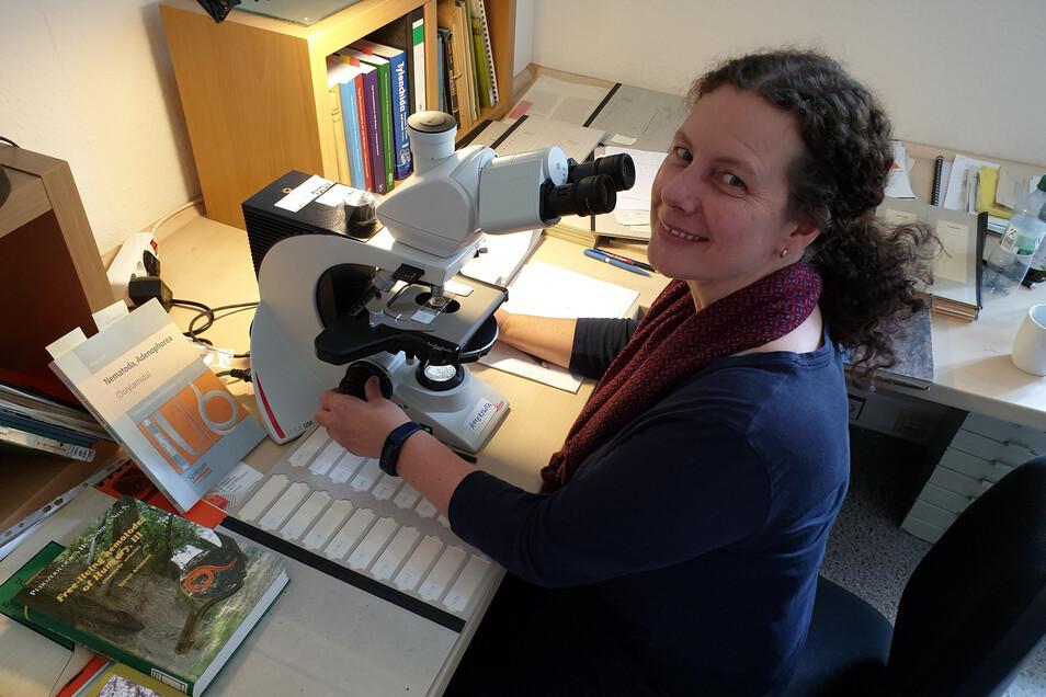 Karin Hohberg sitzt oft am Mikroskop. Nur hier kann sie ihre Lieblingstiere, die Fadenwürmer, in ihrer Winzigkeit erkennen und untersuchen.