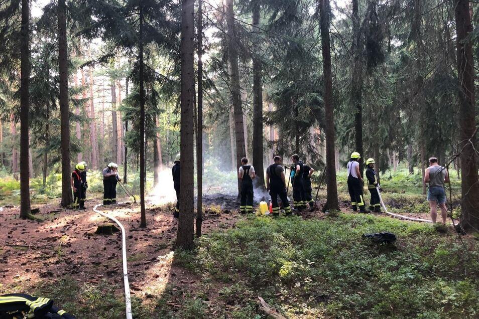 Mehr als 100 Quadratmeter Waldboden in der Höckendorfer Heide mussten die Feuerwehrleute am Sonntagnachmittag löschen.