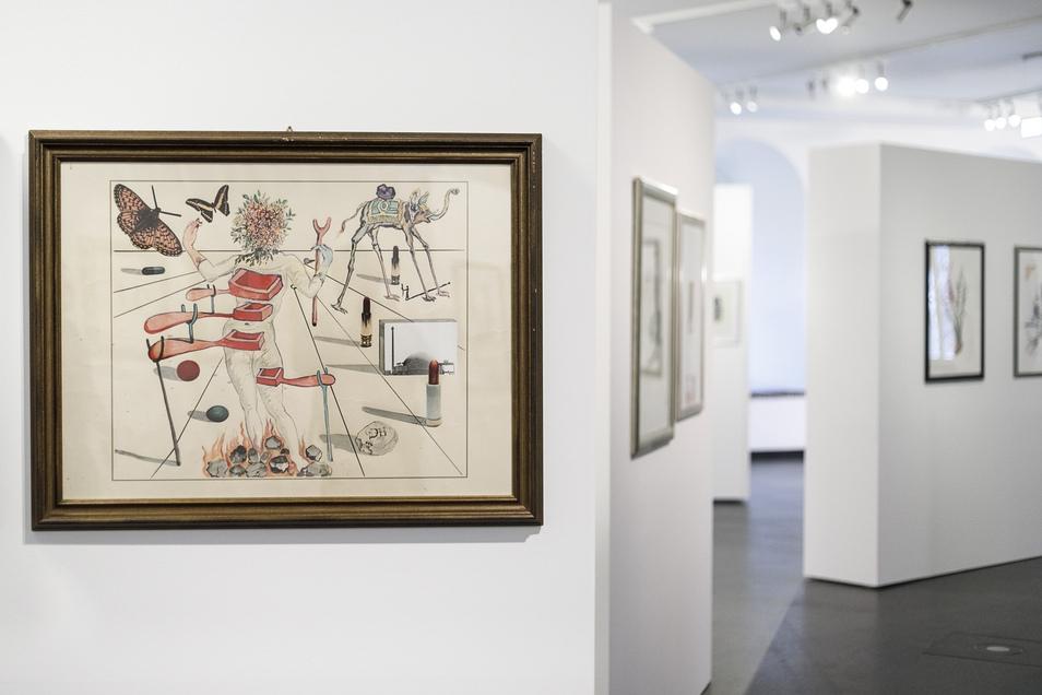 Voller Rätsel wie Dalís Gemälde sind auch seine Zeichnungen. In der Görlitz-Zittauer Doppelausstellung wird klar, mit wie viel Literatur sich Dalí beschäftigte.