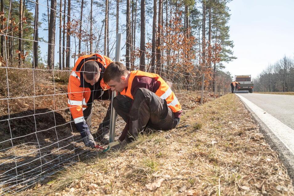 Wildschwein-Zaunbau an der B 115: Jäger Hans Jochen Nevries sieht darin keinen Effekt bei der Bekämpfung der Afrikanischen Schweinepest.
