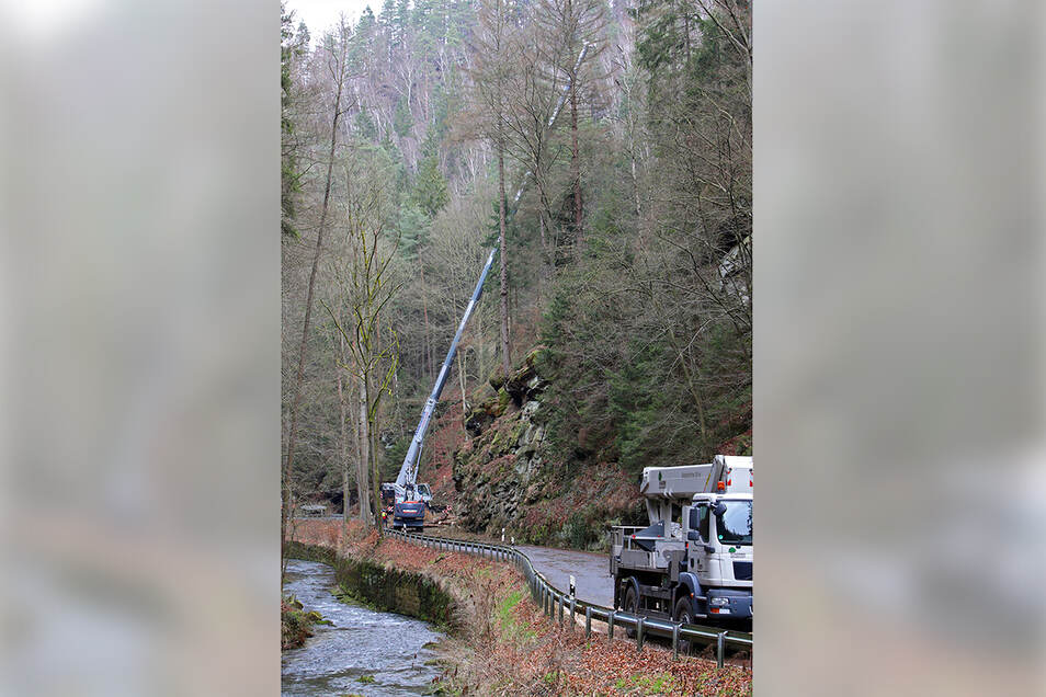 Der Autokran in Stellung: Mit seinem siebzig Meter langen Arm birgt die Maschine gekappte Fichtenstämme aus dem Steilhang bei der Neumannmühle.