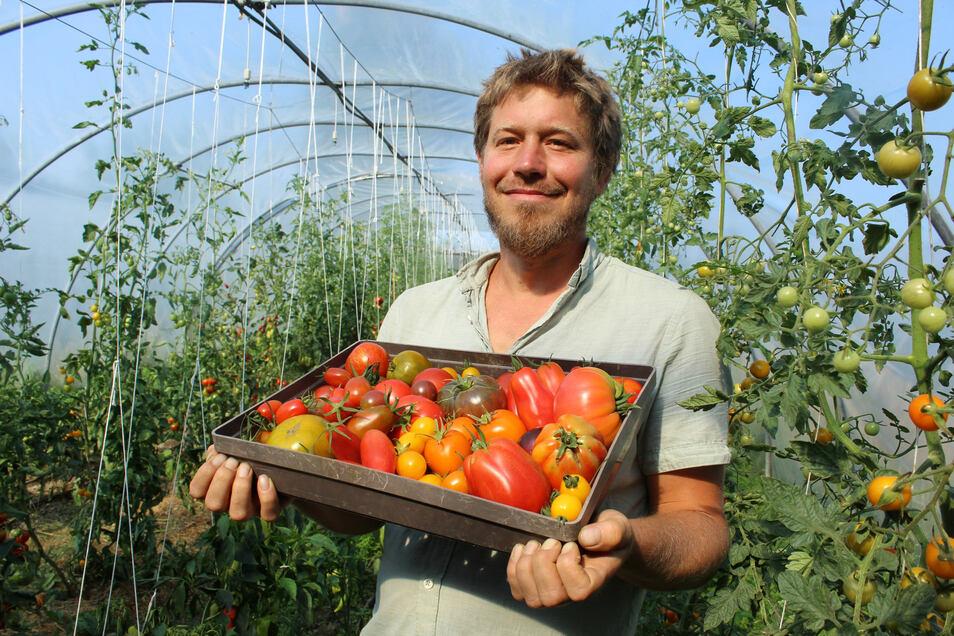 """Ernte im Heckenhof: Seit sieben Jahren baut Florian Schneider in Sohland am Rotstein samenfeste, zum Teil auch alte Tomatensorten an. Sein Wissen über den """"Liebesapfel"""" gibt er jetzt auch bei einem Tomatentag in Wartha weiter."""