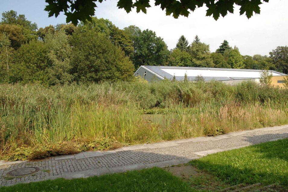 ... und aus dem Becken entstand im Zuge der Landesgartenschau ein Seerosenteich.