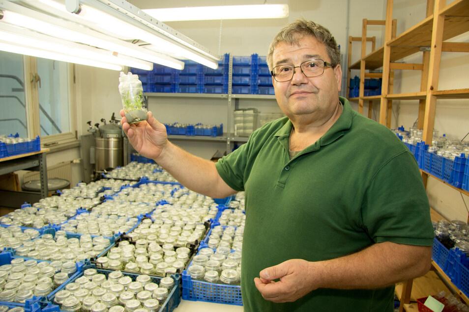 Steffen Keller führt ein europaweit einzigartiges Orchideenlabor im Klärwerk Kaditz. Hier zeigt der 63-jährige Fachmann eines der Gläser, in denen die jungen Pflanzen wachsen.