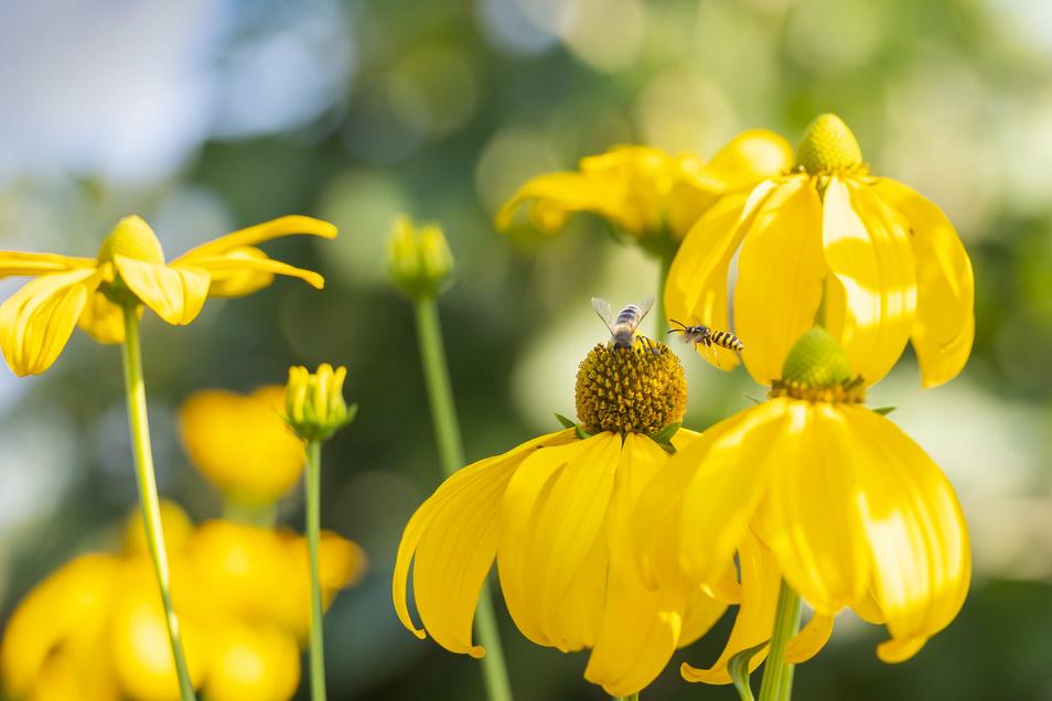 Birgit Kempe freut sich über viele Insekten in ihrem Garten. Deshalb gibt es nicht nur Wiesenbereiche und ein Insektenhotel, sondern heimische Sträucher und Kräuter, die Bienen gern besuchen. Wildkräuter und Brennesseln, die Schmetterlinge gern zur Aufzuc