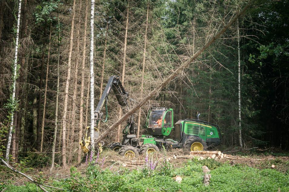 Mit Spezial-Maschinen wird ein Baum nach dem anderen gefällt.