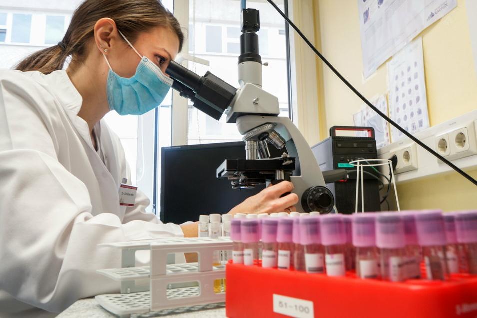 Dr. Christine Hofer untersucht im Medizinischen Labor Ostsachsen in Bautzen eine Blutprobe. In den drei Standorten des Labors in Bautzen, Görlitz und Dresden arbeiten insgesamt etwa 300 Menschen.
