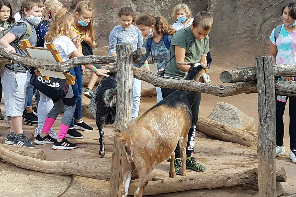 Alle Schüler und Lehrer der Lernförderschule sind in den Zoo nach Leipzig gefahren. Finanziert wurde das mit Spenden.