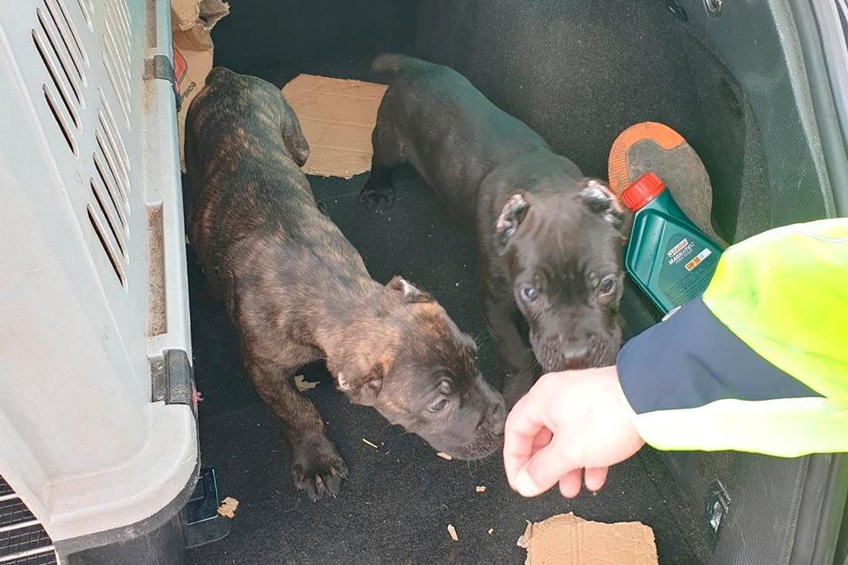 Biggi (links) und James wurden am 29. März von der Bundespolizei an der A17 gefunden.