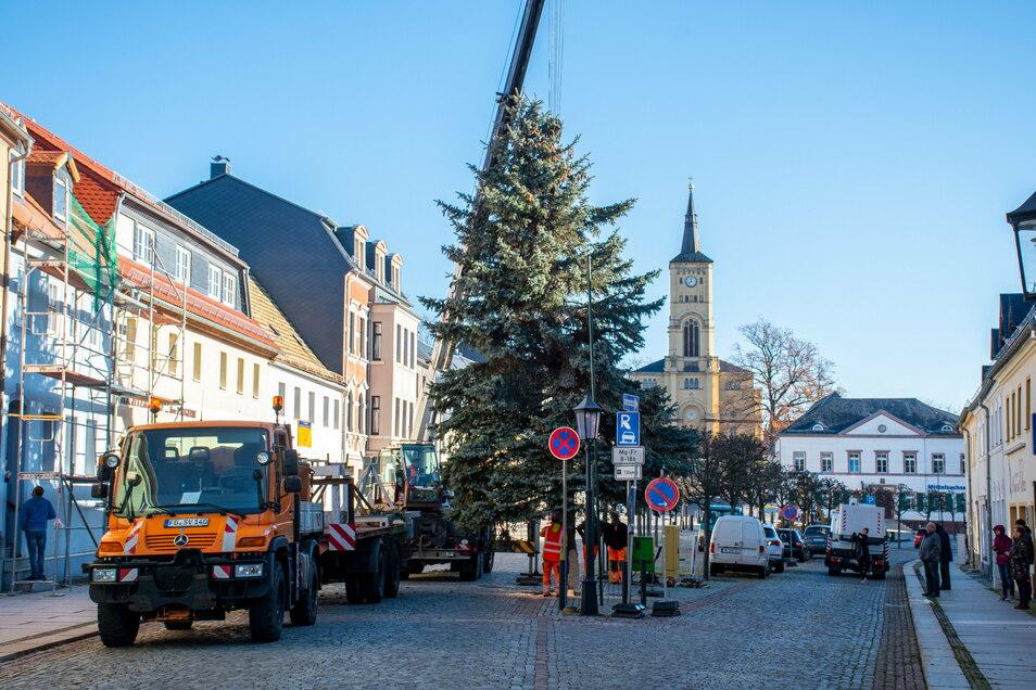 Seit Mittwoch schmückt eine Blaufichte den Harthaer Markt.