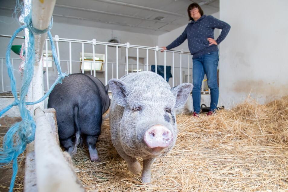 Für Eva-Christine Hoffmann und ihre beiden Minischweine Elli (vorn) und Jimmy bringt die Schweinepest auf dem Moosmutzelhof in Kollm Einschränkungen mit sich.