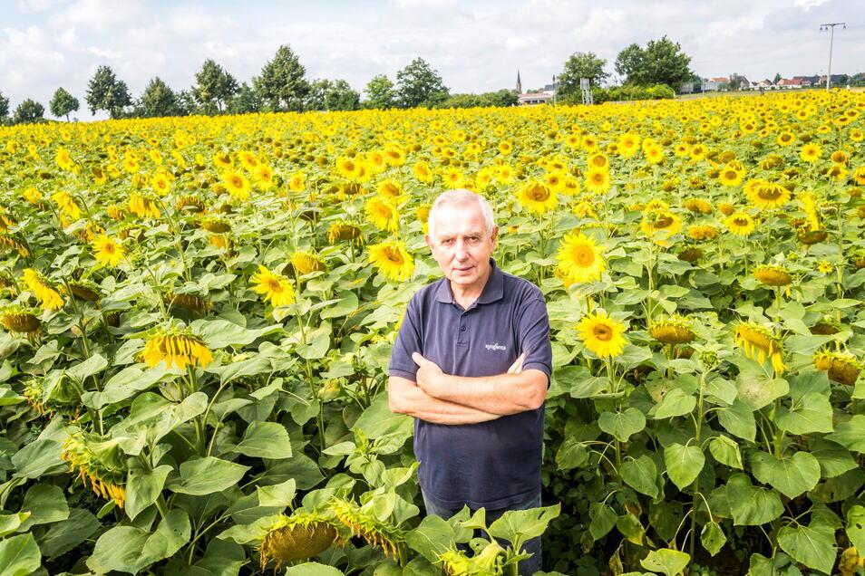 Der Chef der Kreinitzer Agrargenossenschaft Gerhard Förster in einem der Sonnenblumenfelder des Betriebes bei Kreinitz.