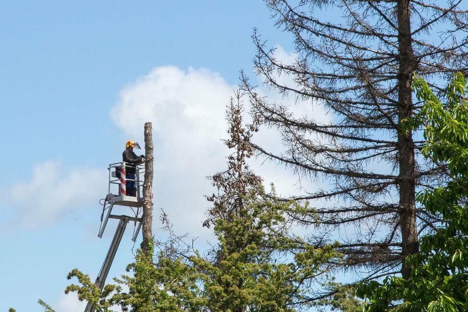 Symbolfoto: Kommunen sollen zukünftig beim Fällen von Bäumen auf privaten Grundstücken mitbestimmen dürfen.
