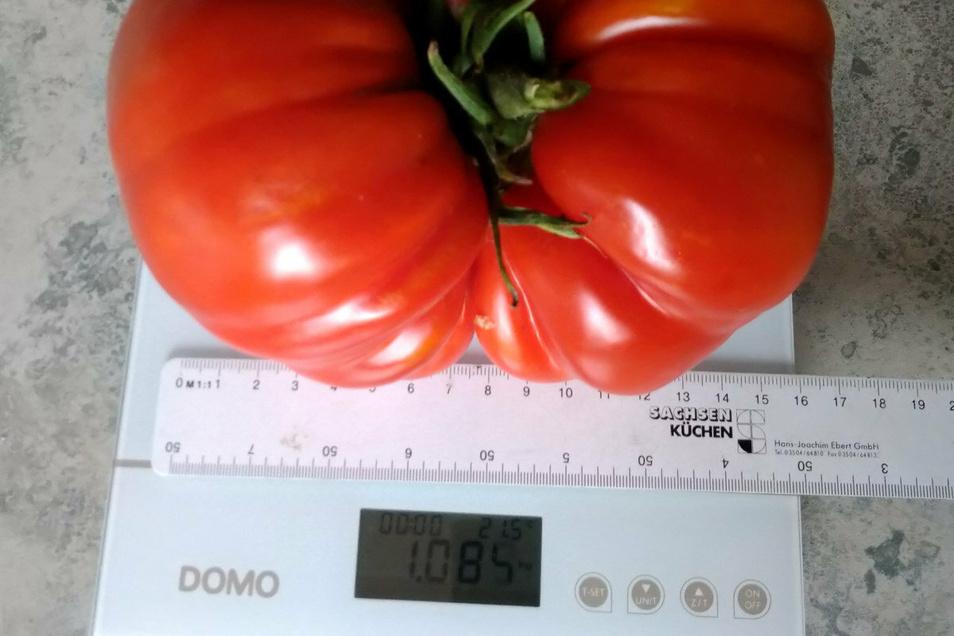 Ohne Lineal bringt es die Bonnewitzer Tomate auf 1070 Gramm. Sie ist damit der aktuelle Rekordhalter.