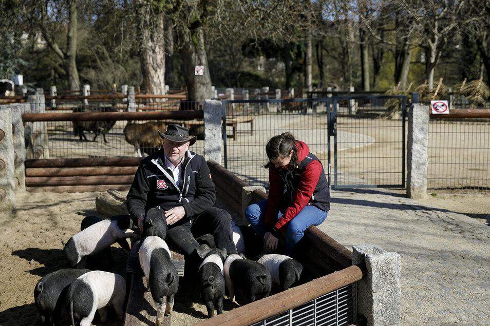 Tierparkdirektor Sven Hammer und Zoopädagogin Isa Plath schauen beim Schweinenachwuchs vorbei. Sie sind heute die einzigen Besucher bei der munteren Truppe.