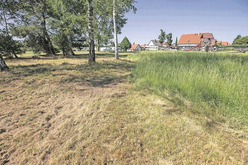 Fachleute mähten in Graupa am Gärtnerweg den Großteil einer Wiese gnadenlos ab. Das stößt bei einigen Anwohnern auf Kritik.