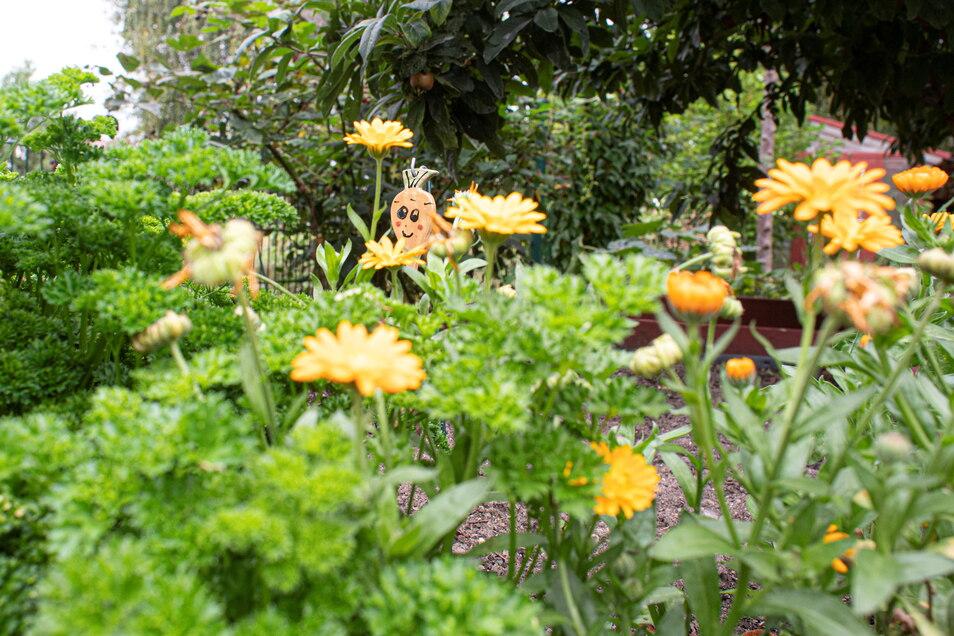 Für die ganzjährig blühende Blumenpracht zeichnet Jutta Fessel verantwortlich.