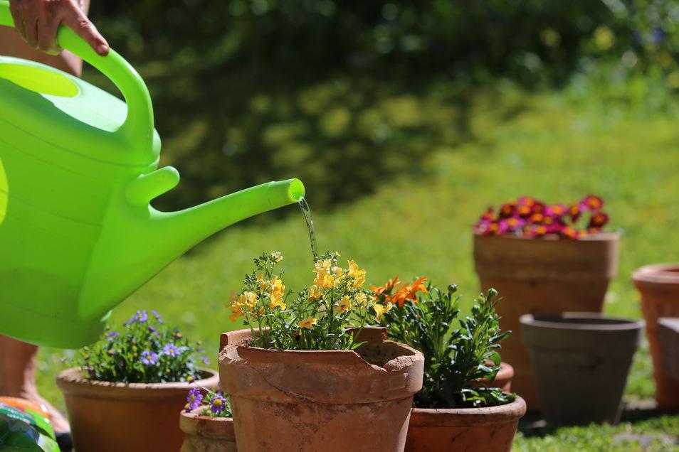 Wer Pflanzen von oben herab mit Wasser beregnet, verschwendet unter Umständen einen Teil der wertvollen Ressource.