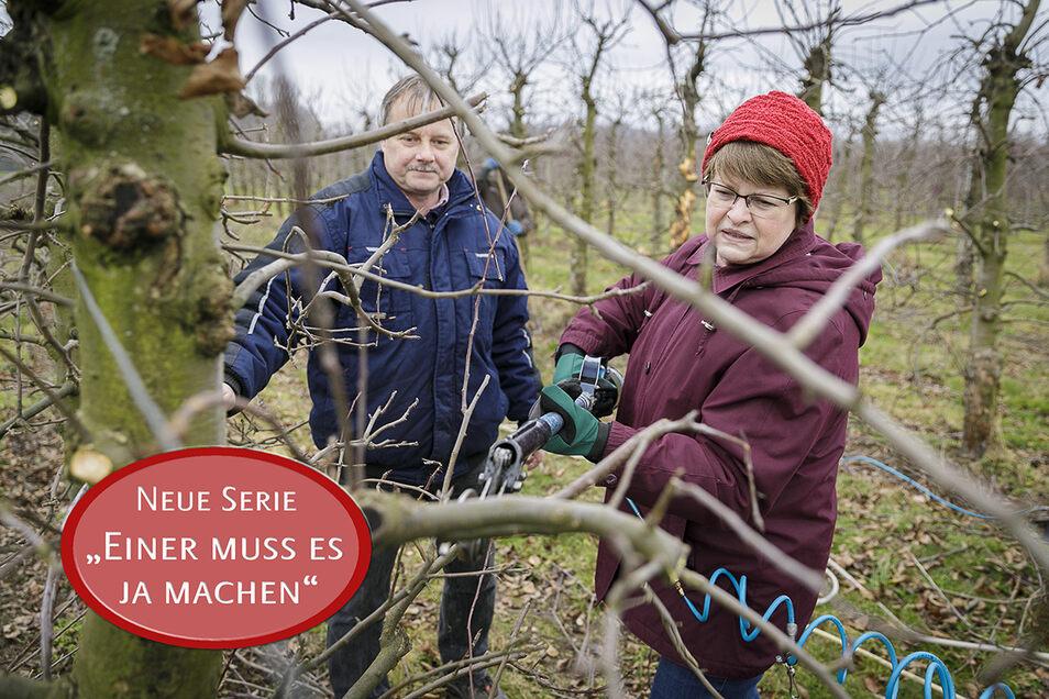 Der erste Schnitt sitzt - nach Anweisung von Obstbau-Chef Mike Schwarzbach. Aber mit dem Tempo der Obstbaugärtnerinnen kann SZ-Redakteurin Gabriela Lachnit nicht mithalten.