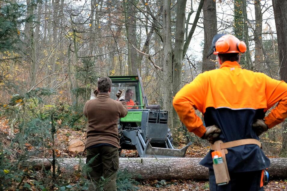 Momentan finden umfangreiche Arbeiten zur Verkehrssicherung im Park Siebeneichen statt. Dazu gehört auch das Fällen von Bäumen.