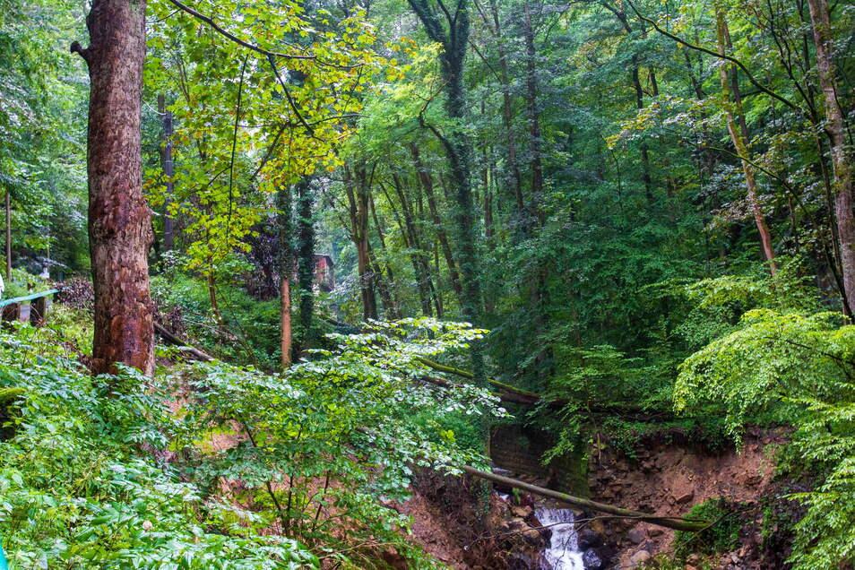 In dem einst industrialisierten Tal mit Mühlen und Sägewerken wuchs ein dichter Wald heran.
