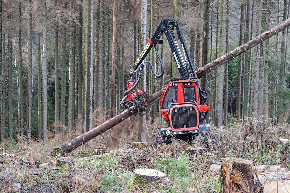 Schwere Technik ist jetzt an einigen Straßen im Umkreis von Halbendorf/Spree im Einsatz. Dort werden trockene Bäume gefällt.