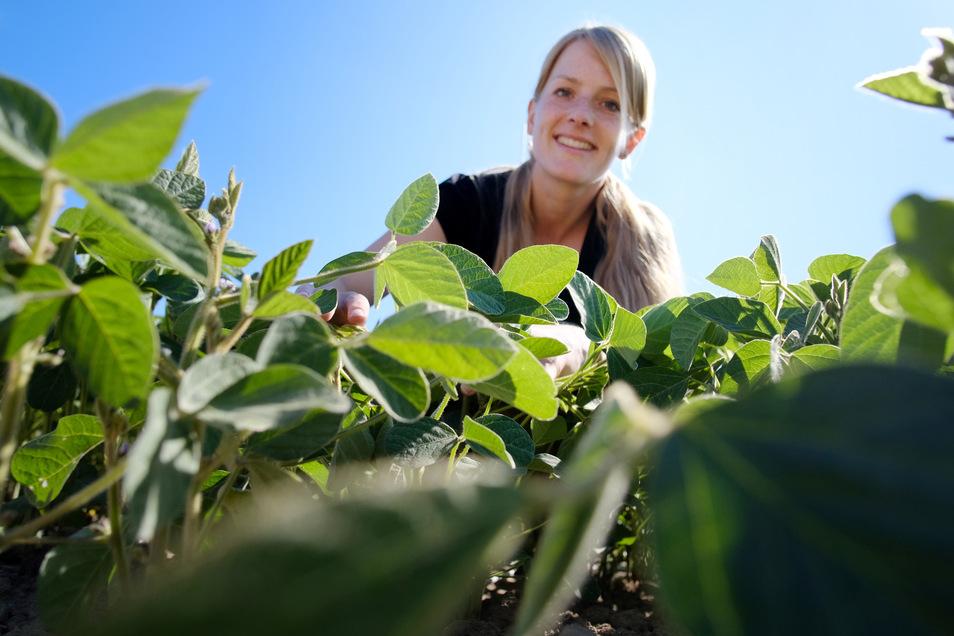 Seit 2018 hat die Agrarwissenschaftlerin Anne Griebsch eine ganz besondere Beziehung zur Sojabohne.