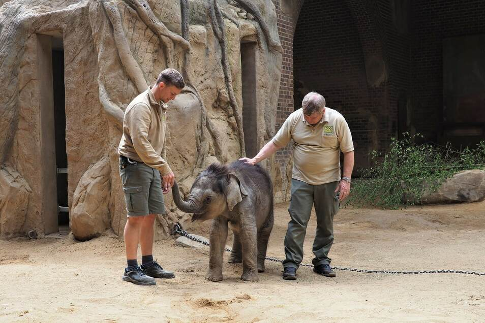 Tierpfleger David Geers (l.) und Zootierazt Dr. Andreas Bernhard überwachen das Elefantenkalb nach dem Aufwachen.