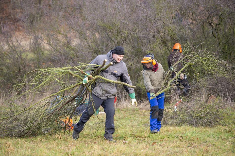 Heckenpflege am Spitzenberg bei Volkersdorf. Früher wurden Schwarzdornhecken regelmäßig zurückgeschnitten, das Reisig als Feueranzünder und zum Kartoffeldämpfen genutzt. Heute kümmern sich Naturschützer darum.