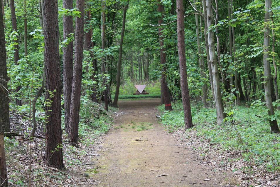 Das ist der Weg zum Ehrenhain mitten im Glaubitzer Wald. Womöglich fand hier oder in der Nähe ein Massaker statt.