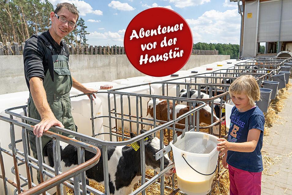 In der Krabat Milchwelt in Kotten bei Wittichenau darf die achtjährige Elisa zuschauen, wie Tierpfleger Horst Dutschmann den kleinen Kälbchen Eimer mit frischer Milch bringt.