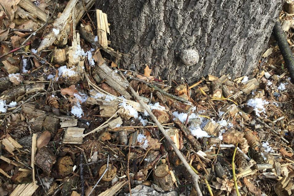 Ein Unbekannter hat schon mehrfach diese kristalline Substanz um einen Straßenbaum an der Hauptstraße in Mittelherwigsdorf gestreut.