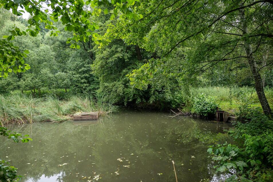 Das Grundstück von Karl-Heinz Neumann in Weinhübel: rechts die geöffnete Schleuse.