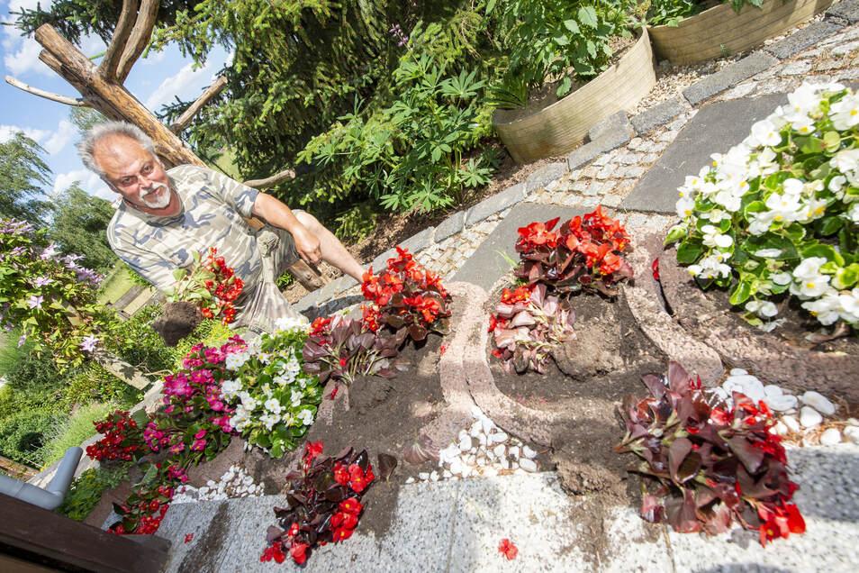 Wolfgang Haschler begutachtet in seinem Garten in Roßwein den Schaden, den offensichtlich Waschbären angerichtet haben. Die Tiere haben unter anderem Eisbegonien ausgebuddelt.