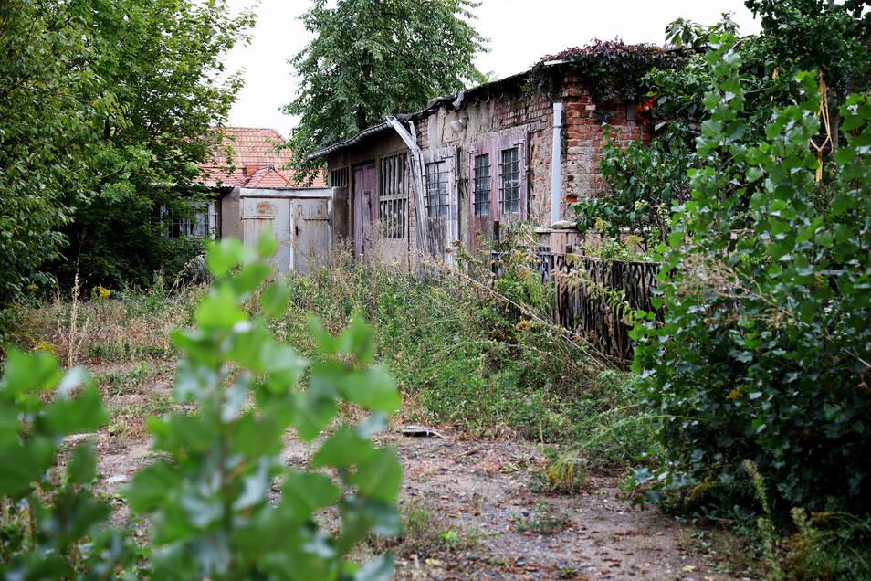 Das verwilderte Grundstück der ehemaligen Marktmeisterei in Riesa wird umgestaltet. Der Gebäudekomplex kommt dafür weg.