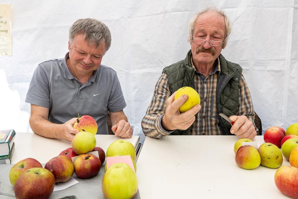 Klaus Schwartz (re.) hält einen Gelben Richard in der Hand, eine wohlschmeckende, aber seltene alte Apfelsorte. Zusammen mit Ralf Frenzel hat er in Ulberndorf Sorten bestimmt.