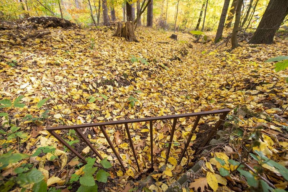 Das bunte Laub deckt auch manchen Einbau zu, mit dem der Lockwitzbach in den vergangenen Jahren eingezwängt wurde. Jetzt soll er teilweise wieder eine naturnahe Ausprägung erhalten.