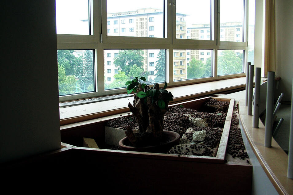 Die Achtgeschosser der Bautzener Allee, aus den Café-Fenstern gesehen. Selbst die Grünpflanzen sind noch in Bestform. Allerdings: Sie sind reineweg künstlicher Natur.
