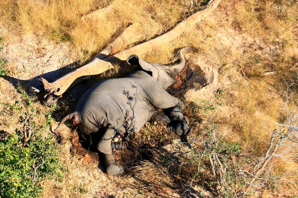 Erst vor wenigen Monaten stellte ein Massensterben von Elefanten im weltberühmten Naturparadies Okavango-Delta die Behörden vor ein Rätsel. Nun sind dort erneut viele Elefanten auf rätselhafte Weise ums Leben gekommen.