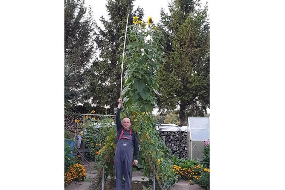 """Der Mann von Julia Hänsel ist 1,80 Meter groß. Der Messstab hat eine Länge von zwei Metern. """"Und immer noch ist Luft dazwischen"""", schreibt sie zu den Sonnenblumen im Garten der beiden in Bellwitz bei Löbau."""