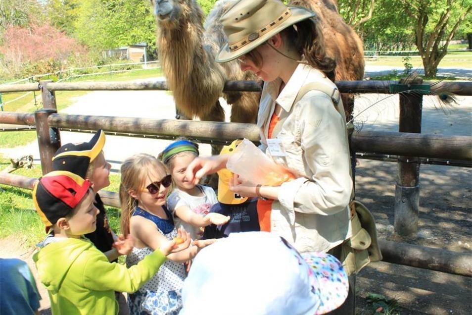 Letzte Station: Kamele füttern. Dazu verteilt Jenny geriebene Möhren.