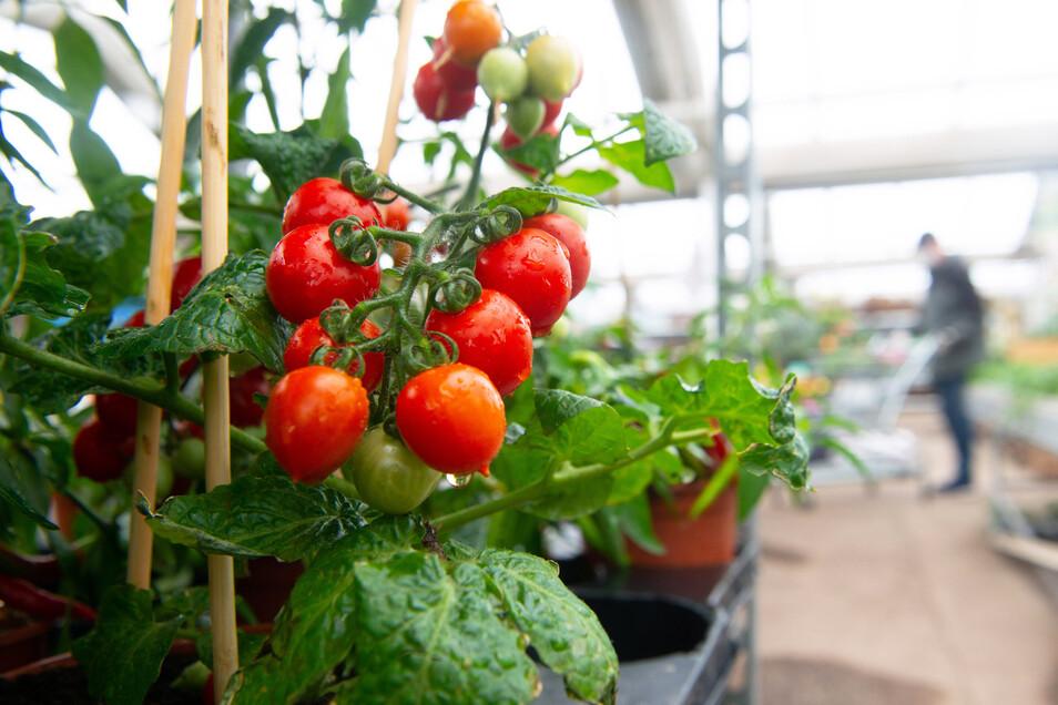 So etwas ist derzeit besonders gefragt. Selbstversorgung ist für viele Pflanzenfreunde nach Corona ein wichtiges Thema, meinen die Gartencenter-Chefs.