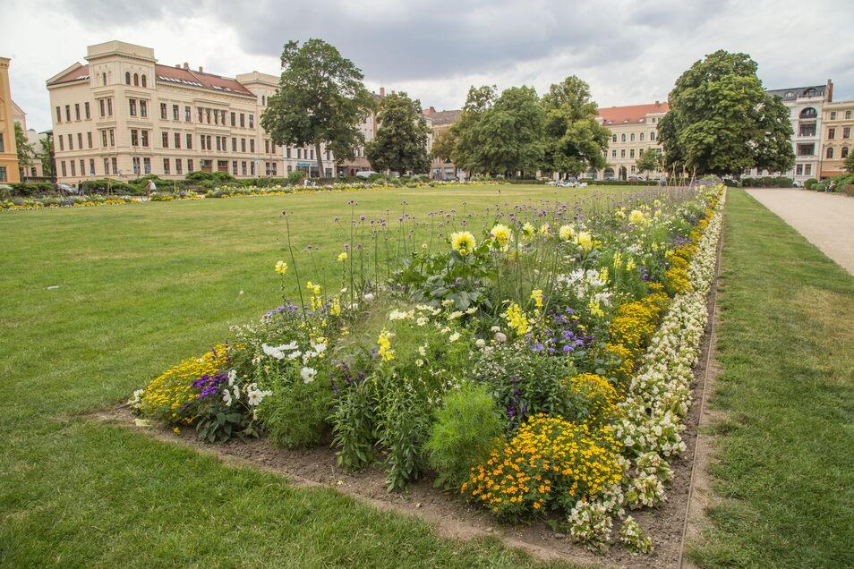 Sommerbepflanzung 2020 auf dem Görlitzer Wilhelmsplatz. Die Größe des Platzes ist für die Stadtgärtner auch beim Gießen eine Herausforderung.