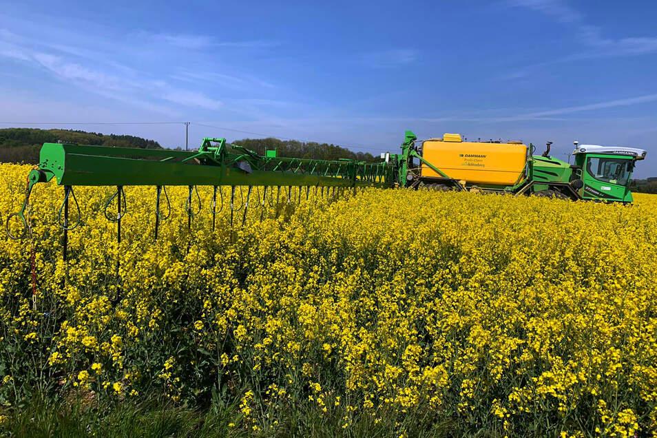 Mit einem neuen Verfahren bringt die Agrargenossenschaft Grünlichtenberg Pflanzenschutzmittel auf den Rapsfeldern aus. Das hilft ebenso wie die bisherige Methode, schützt aber die Bienen.