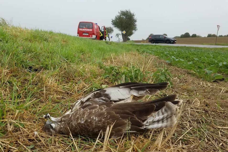 Nahe der Unfallstelle lag dieser verendete Bussard im Straßengraben. Ob er bei dem Unfall eine Rolle gespielt hat, ist derzeit noch unklar.