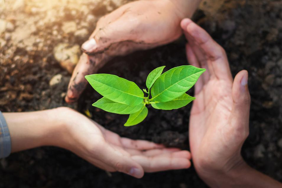 Die Aufrechterhaltung und der Schutz von Ökosystemen ist ein Ziel von nachhaltigem Handeln.