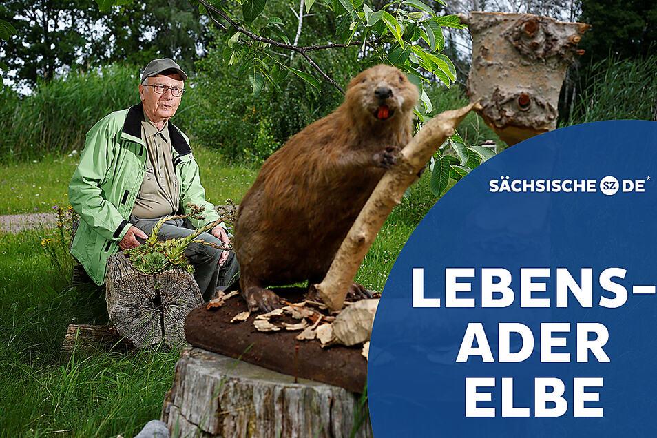 Auch mit 85 kümmert sich Gottfried Kohlhase noch um Burgen und Bauwerke der Elbebiber in der Gegend um Torgau.