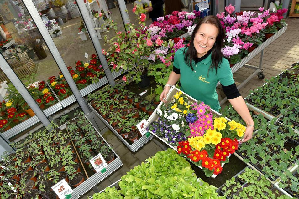 Martina Neumann von der gleichnamigen Gärtnerei in Mittelherwigsdorf inmitten von Frühlingsblühern und Gemüsepflanzen, die sie selber aufziehen.